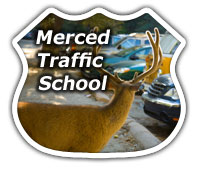 Get Your Merced Traffic Tickets Dismissed with Ease!